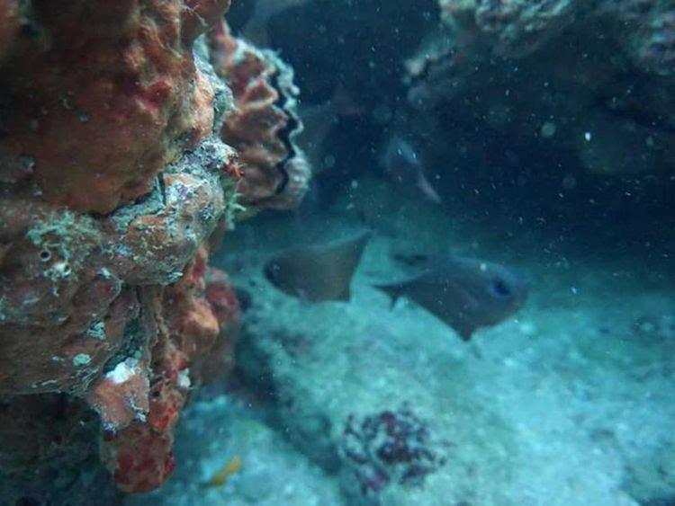 Balochistan coral bleaching Pakistan